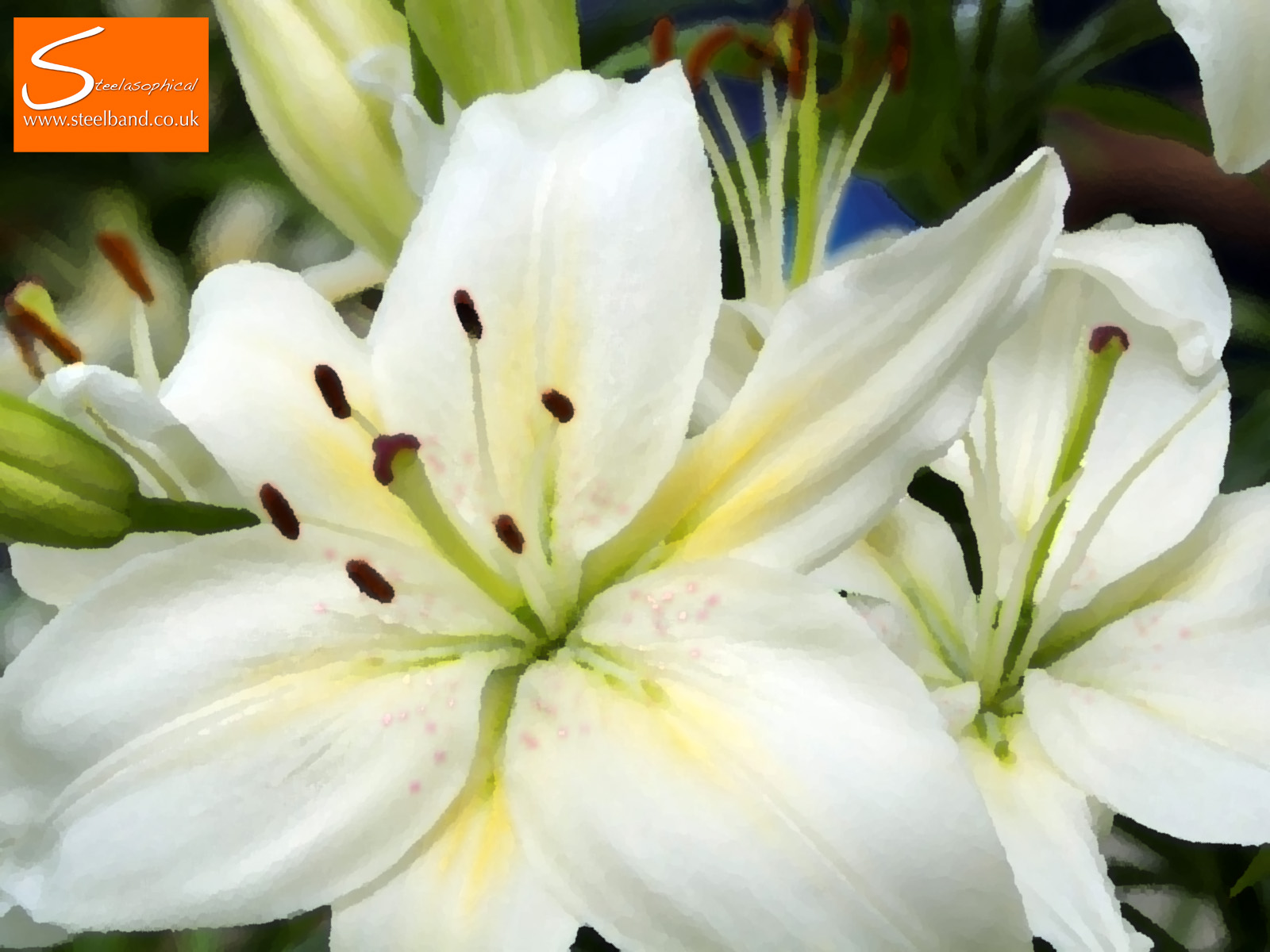 Common Flowers And Their Meanings Steelasophical Caribbean