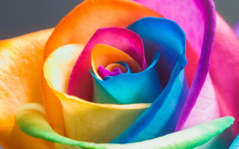 Rainbow-Flowers steeldrums